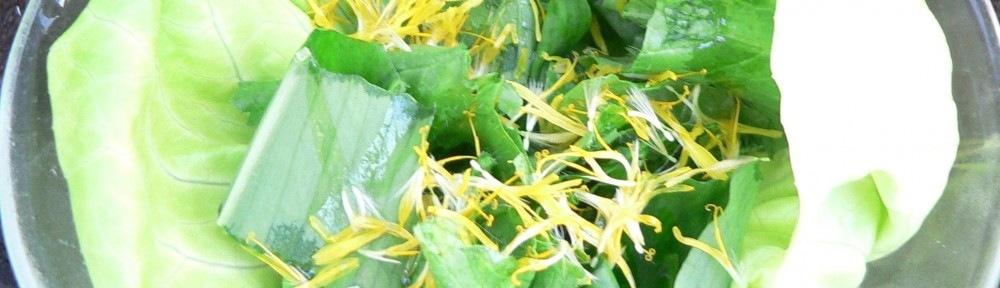 Pitypangos zöld saláta
